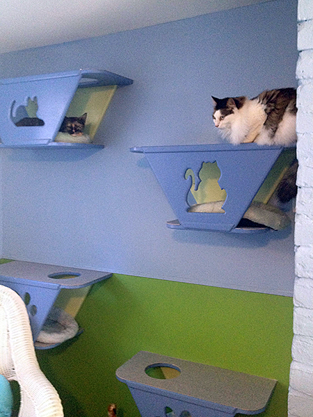 Cats have a choice of cozy wall nooks for napping — or for contemplating a nap. (Photo by Mayor's Alliance for NYC's Animals)