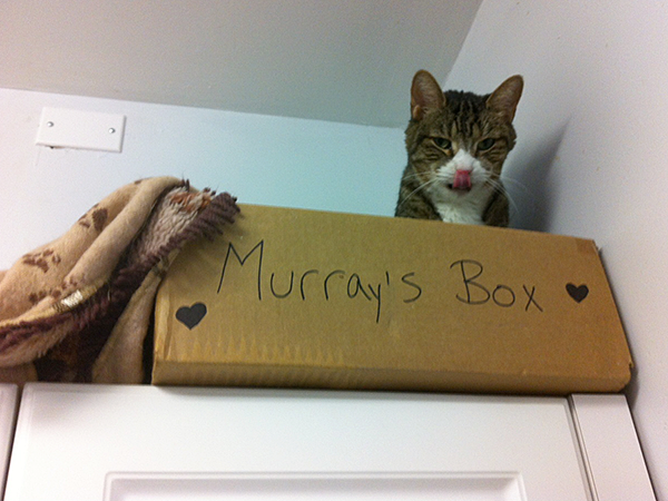 Murray is just one of the shelter's cats whose individual needs are met. He prefers to be away from other cats, and spends a lot of time high up in his box in Susan Whittred's office. (Photo by Susan Whittred)