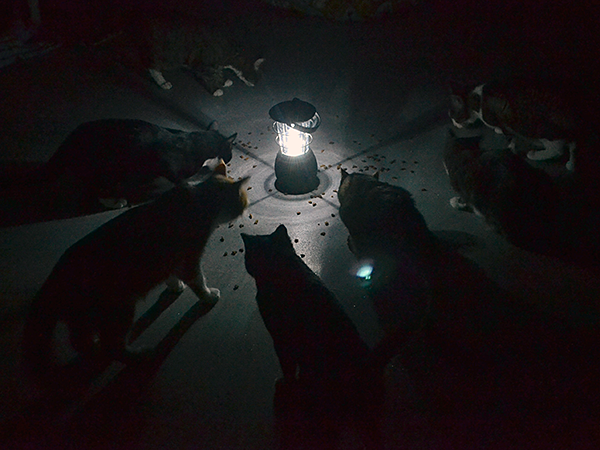 The shelter's cats calmly crunched kibble around a hurricane lantern while Hurricane Sandy raged outside. (Photo by Lynn Manno)