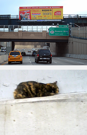 While on her way to work, Alliance staffer and experienced feral cat colony caretaker, Evon Handras, spotted a small and very frightened calico cat on a ledge alongside a stretch like this of the Brooklyn-Queens Expressway. (Photo by Evon Handras)