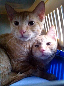 Do we look like garbage to you? With the help of a network of caring people, Nacho and Rusty are now safe and awaiting adoption. (Photo by Cats in the Cradle Rescue)