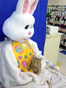 Brave little Rusty posed with the Easter Bunny and met potential adopters at Petco on March 23. (Photo by Cats in the Cradle Rescue)