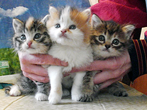 Removing kittens reduces the costs to feed and care for a colony and allows for a better quality of ongoing, lifelong care to be provided to remaining colony members.