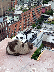 Paddy was named in honor of the construction worker who patiently coaxed him away from a 200-foot ledge to safety.