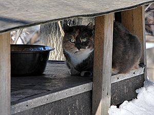 A raised feral cat feeding station with a roof can help keep food from freezing or being buried by snow. (Photo by Krista Menzel)