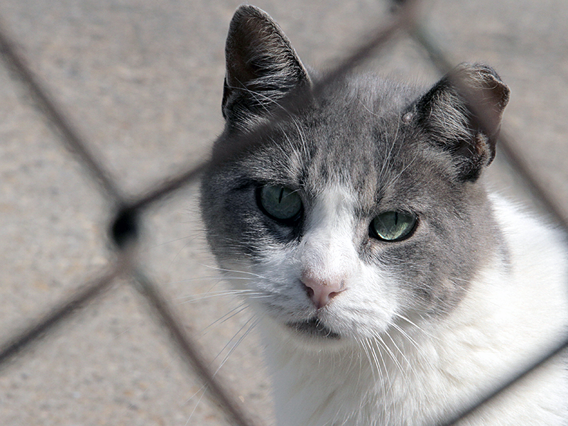6388ae803d92 NYC Feral Cat Initiative Does Not Place Cats for Rodent Control