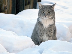 Stray and feral community cats need protection from NYC's cold, damp winter weather. (Photo by Krista Menzel)