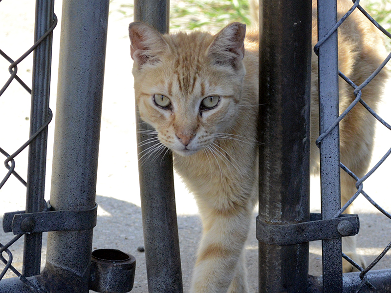 52683234cfd503 NYC Feral Cat Initiative Does Not Place Cats for Rodent Control
