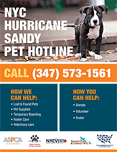 NYC Hurricane Sandy Pet Hotline