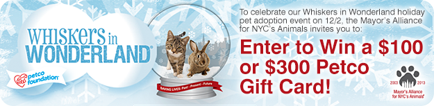 Enter to Win a $100 or $300 Whiskers in Wonderland Petco Gift Card!