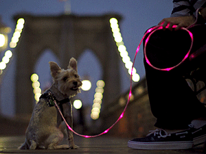 Edie models The Pup Crawl Lights-Up Leash in pink. (Photo by The Pup Crawl)